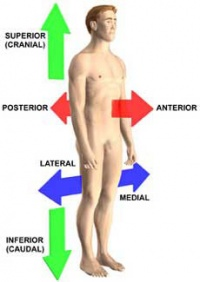"""Direction of human body in biology"""